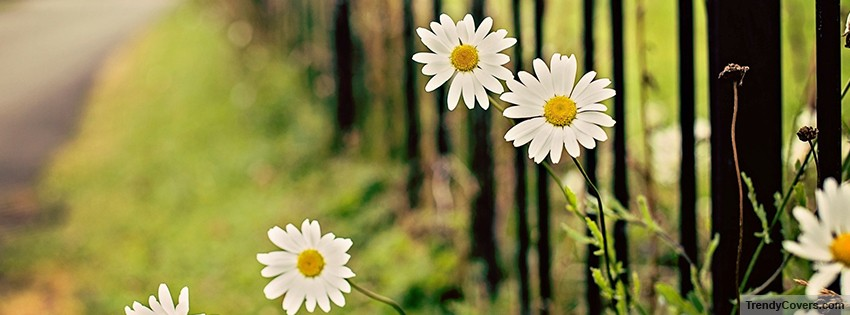 flowers_chamomile_fence_facebook_cover_1394708080-1