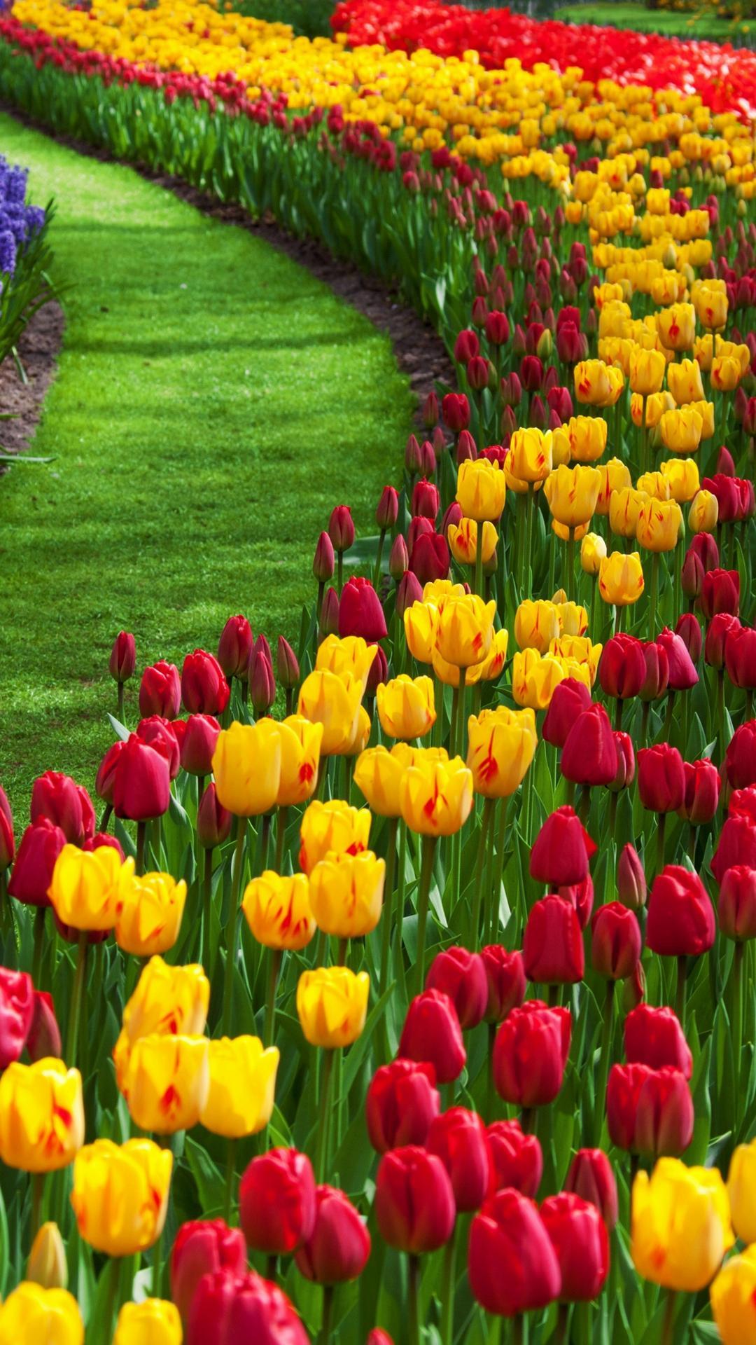Flowers-c542f575-d2ab-3849-a679-36511eb926f5